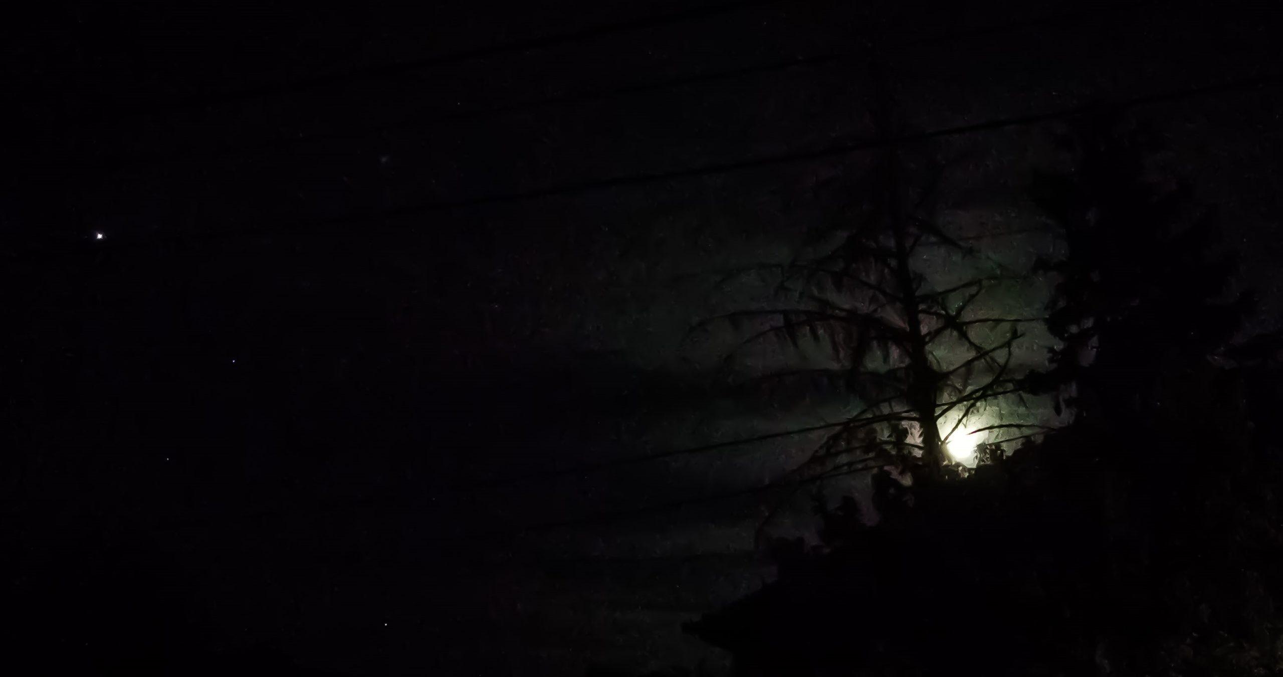 telihol fák között, homályos, félelmetes, sötét kép